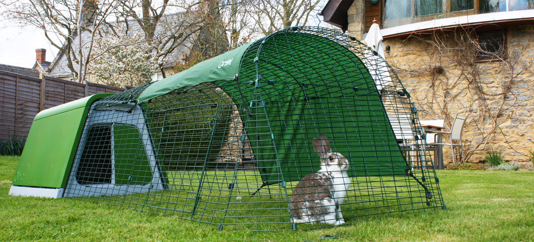 eglu_go_rabbit_hutch_rabbit_sat_in_fox_resistant_rabbit_run