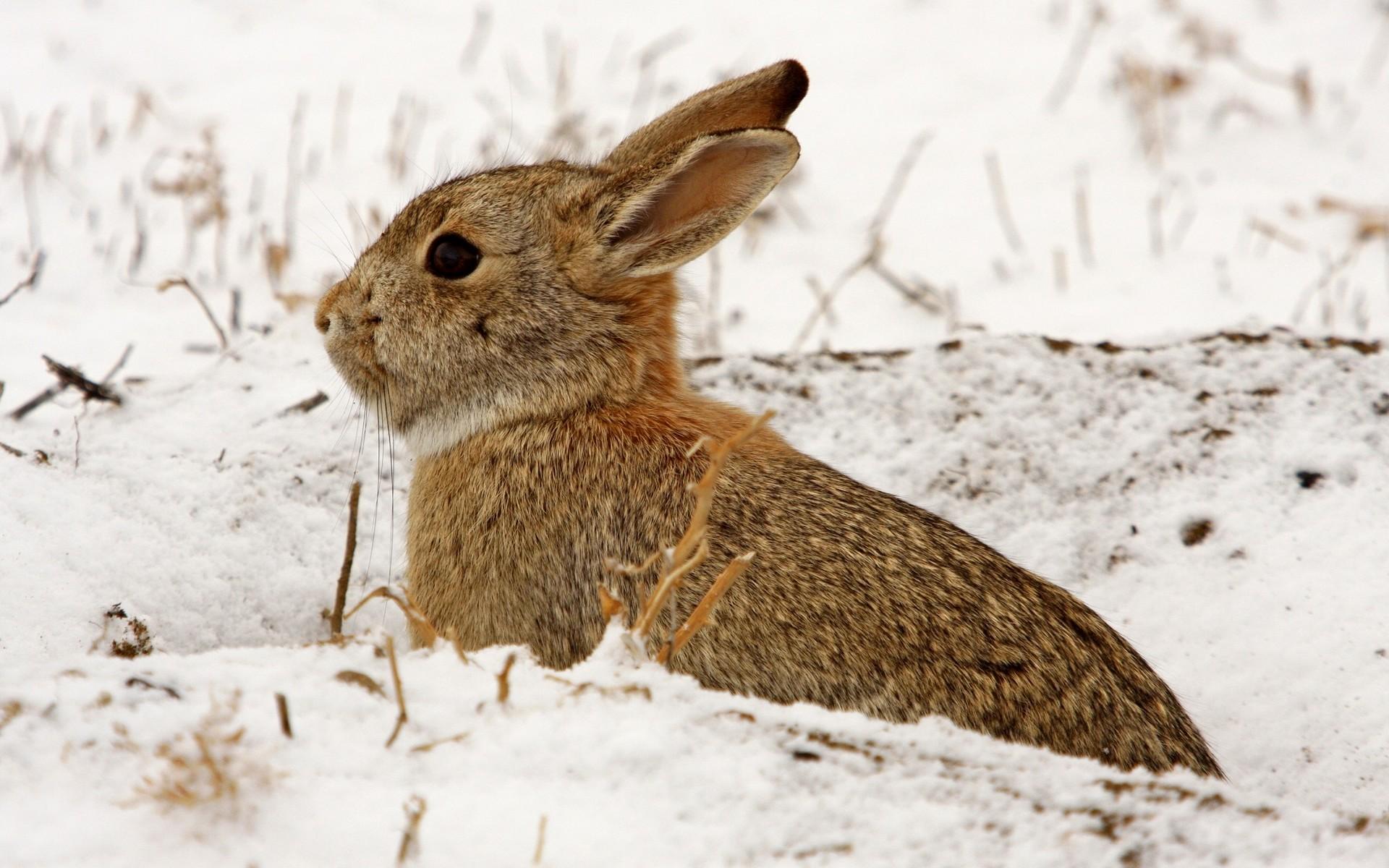 ferme-lapin-neige
