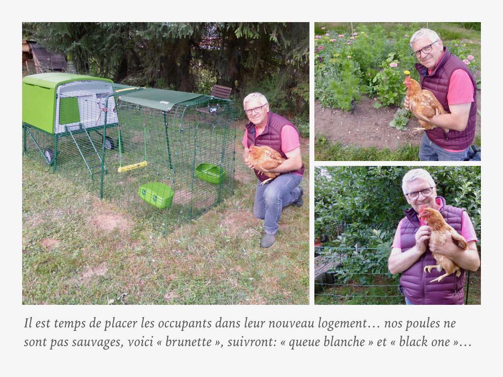 Poulailler-sur-roues-vert-eglu-cube