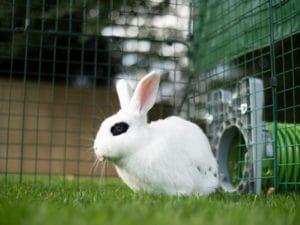 Un lapin blanc avec des tâches noires assis dans l'herbe 2