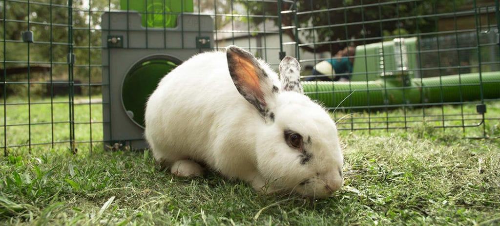 Un lapin blanc avec des tâches noires assis dans l'herbe