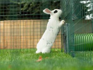 Un lapin blanc avec des tâches noires debout sur ses pattes arrière dans l'herbe