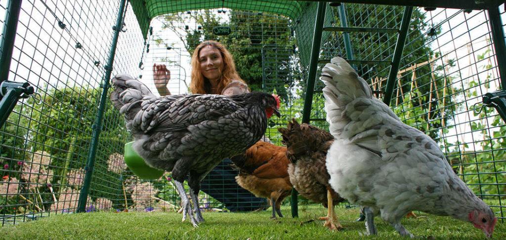 Et bilde tatt underfra inni et Eglu hønsehus fra Omlet, med en smilende kvinne som ser inn på hønene sine som hakker på gresset.