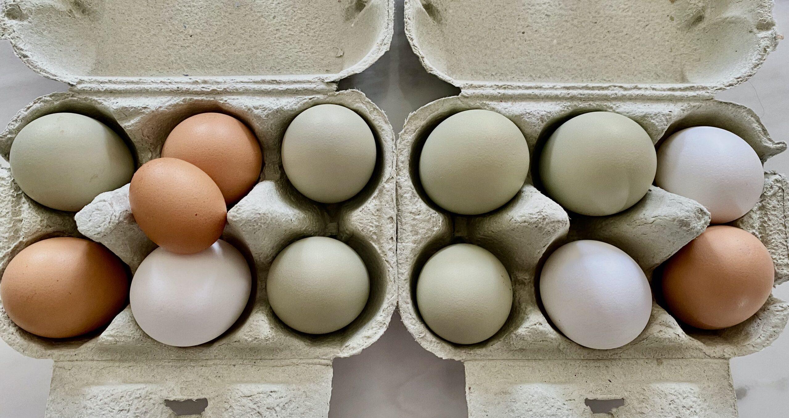 Des œufs dans des boîtes à œufs