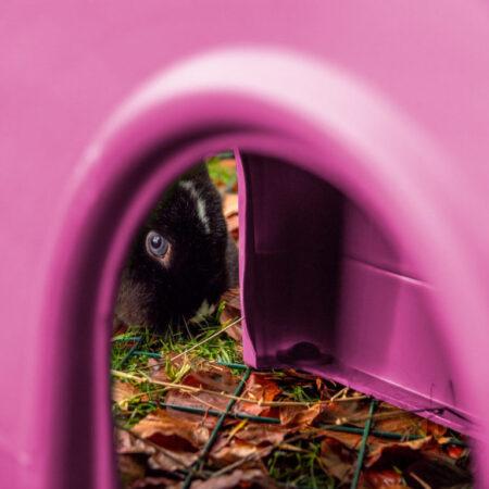 Un lapin aux yeux bleus qui regarde à travers un abri Zippi