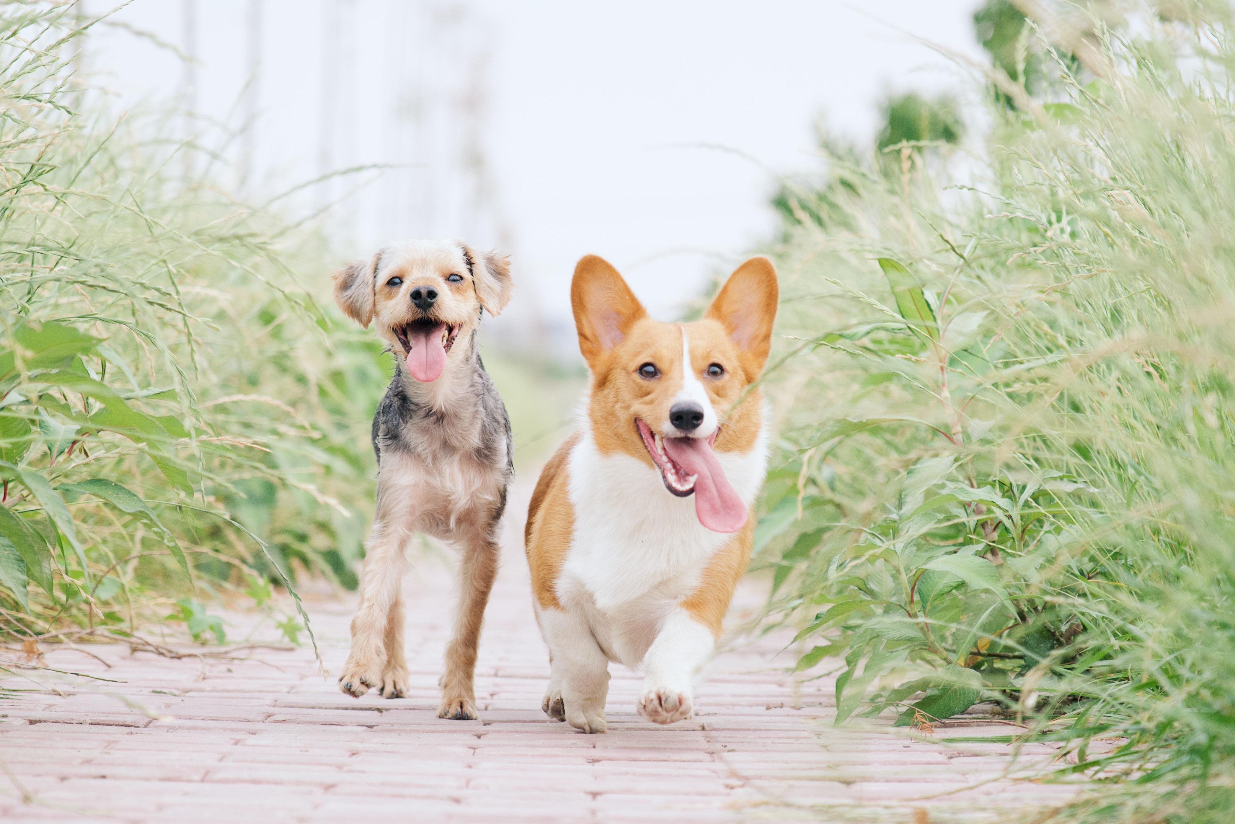 site rencontre entre chien rencontres brel fnac
