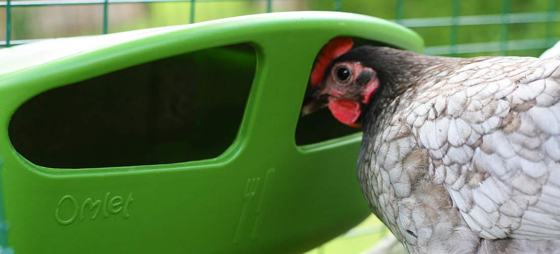 Une poule qui jette un coup d'œil dans une mangeoire pour poules d'Omlet