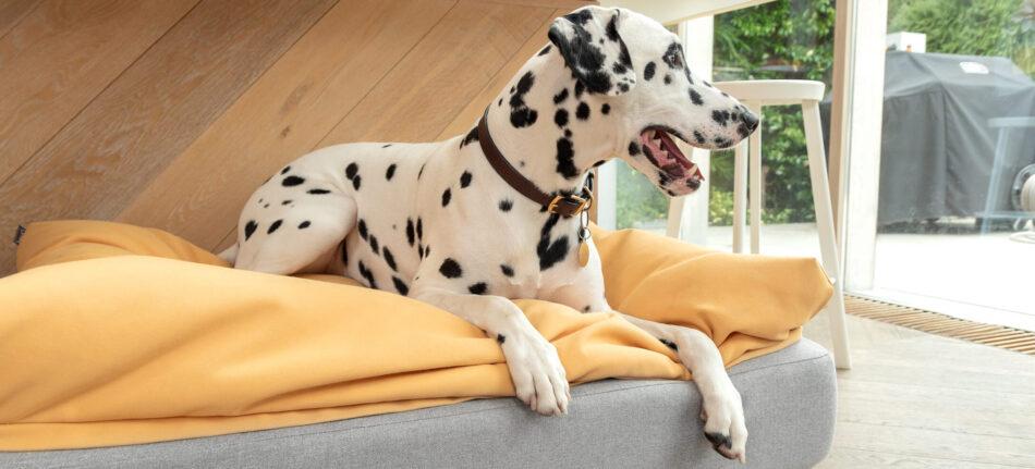 Dalmatien sur un surmatelas traversin sur un lit pour chien Topology