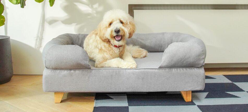 Goldendoodle qui se repose sur un lit Bolster gris