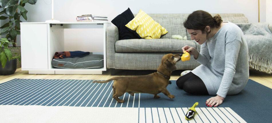 Un Teckel qui joue à l'intérieur avec sa maîtresse, avec un lit pour chien Fido Nook derrière eux