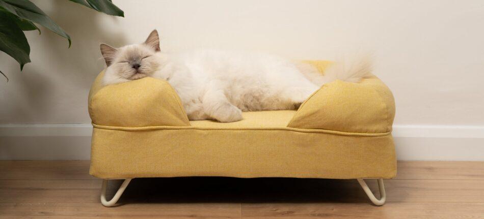 chat Ragdoll qui dort sur un lit pour chat Bolster jaune