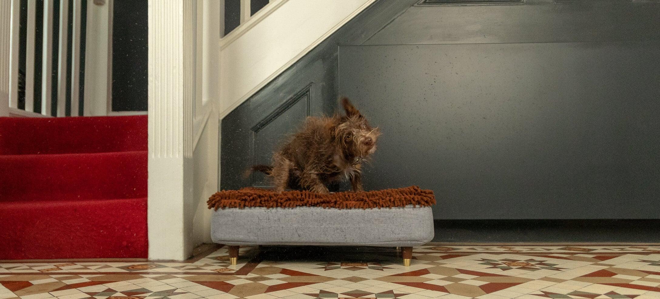 Un chien marron qui se secoue pour se sécher sur son lit Topology