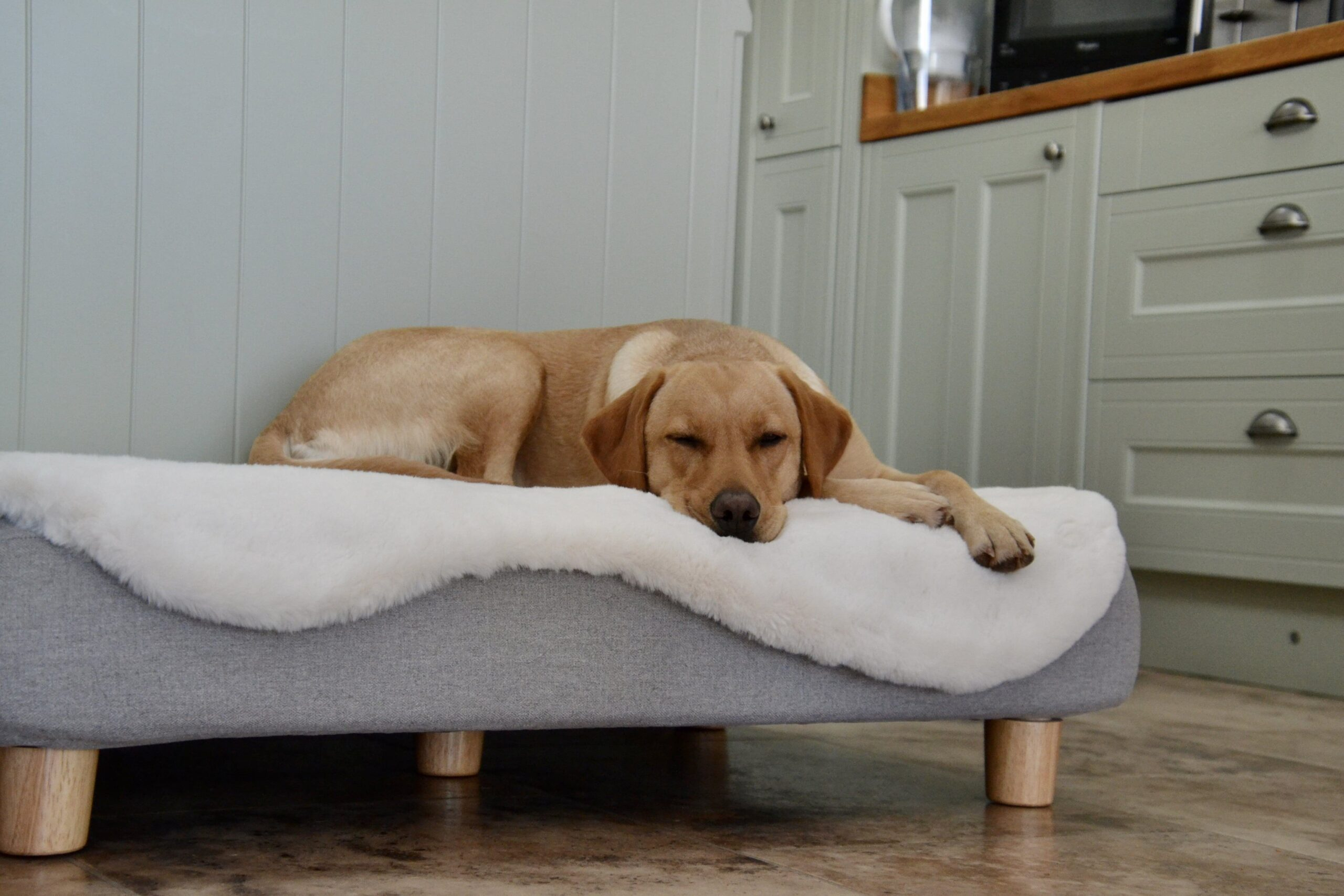 Un labrador allongé sur un lit Topology