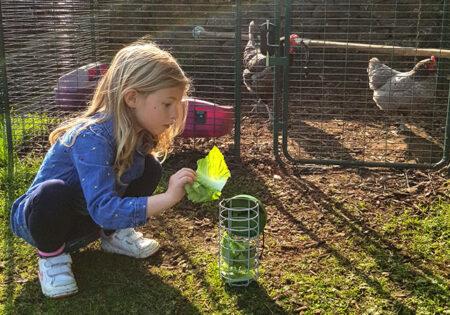 gardez vos poules en automne en remplissant le distributeur de friandises